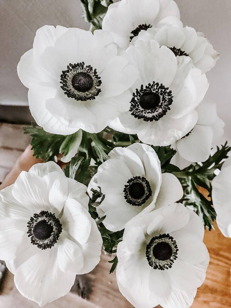 Anenome Flower - Moara Crochet